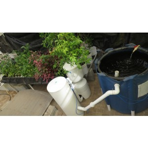 Recirculating Aquaponics System (256 Plants)
