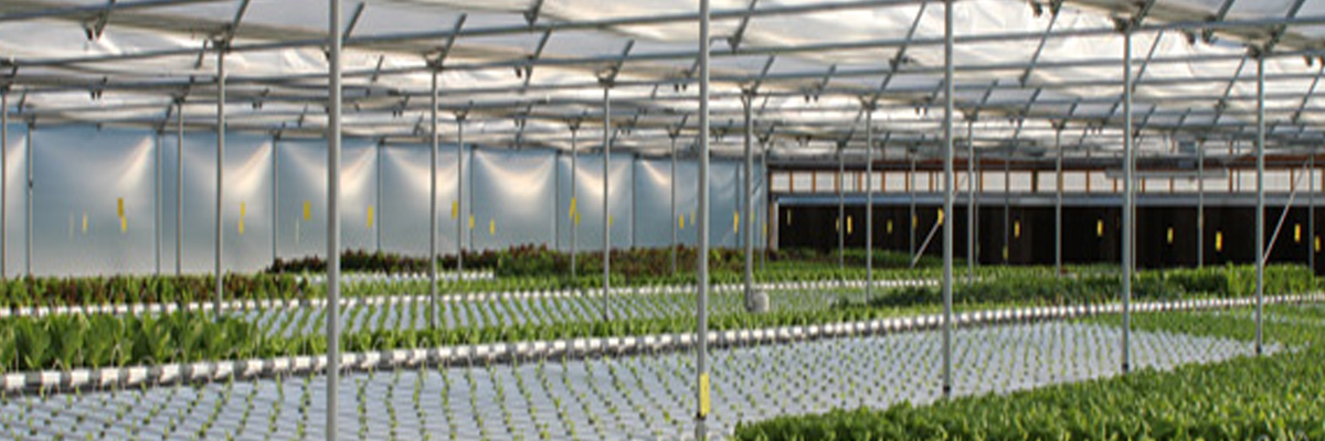 commercial hydroponic and aquaponic systems